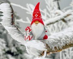 Aloe Vera da bere a Natale